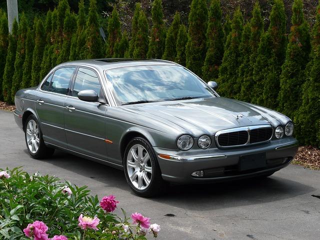 Jaguar-im-hof-zu-verkaufen